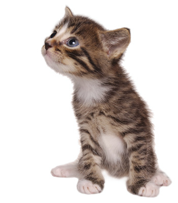 Free Kittens Dont Exist Thoughts Build Vs Buy Billing Systems likewise Prefab Homes Mississippi moreover A Small House In The Island 21616031 besides Watch likewise Watch. on tiny house plans