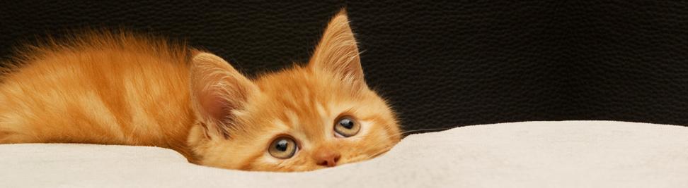 Free-kitten